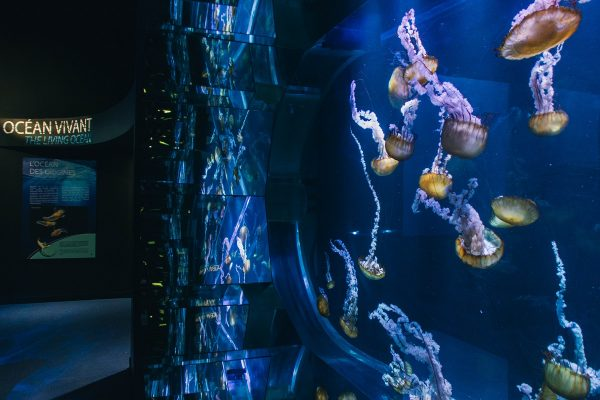 Aquarium de méduses à Nausicaa