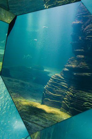 Décors sous-marin dans un aquarium à Nausicaa