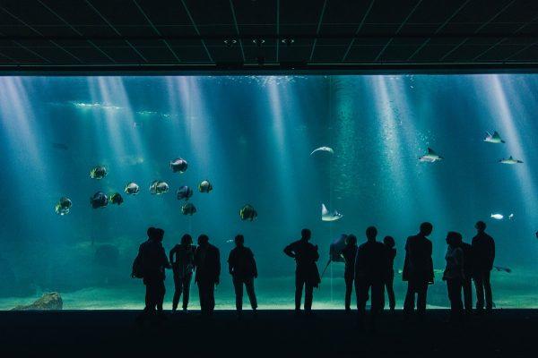 Nausicaa et son aquarium derrière un grand écran de verre
