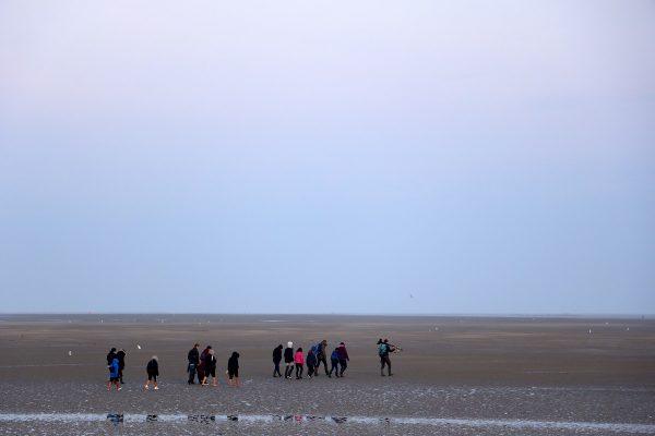 Randonnée guidée dans la baie de Somme