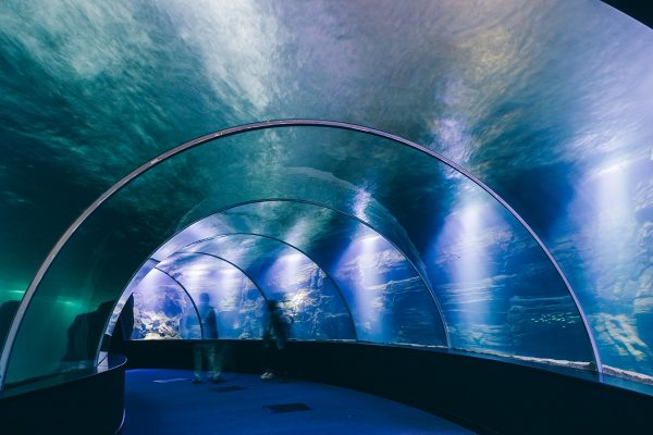 L'aquarium tunnel de verre à Nausicaa