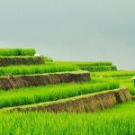 Rizières de Jatiluwih, en terrasses, à Bali