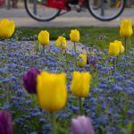 Un V'Lille près du parc Vauban, aux couleurs du printemps